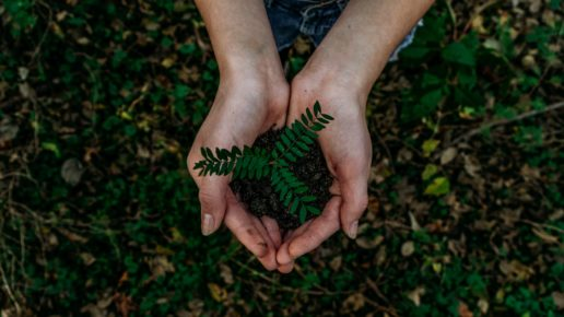 hands holding small plant for earth day